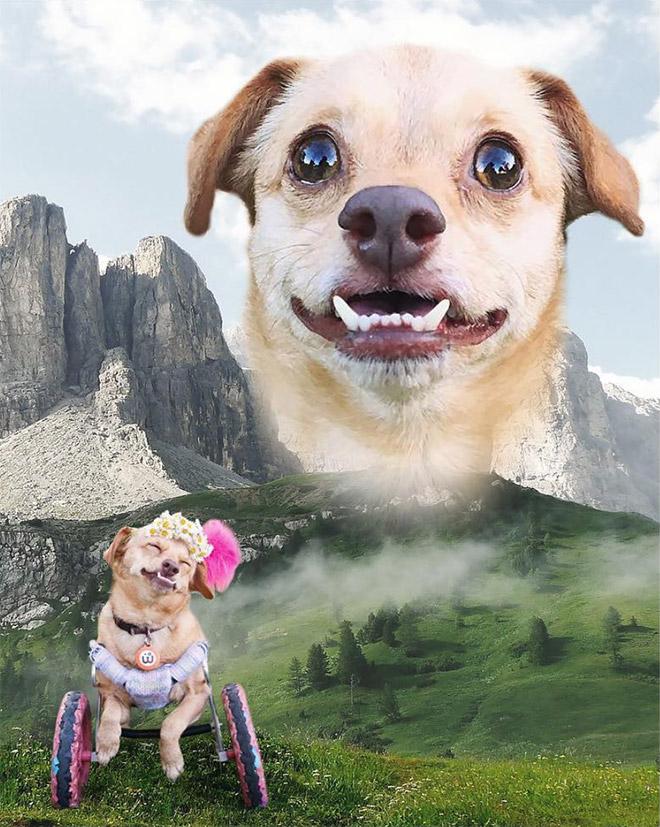 портрет пса