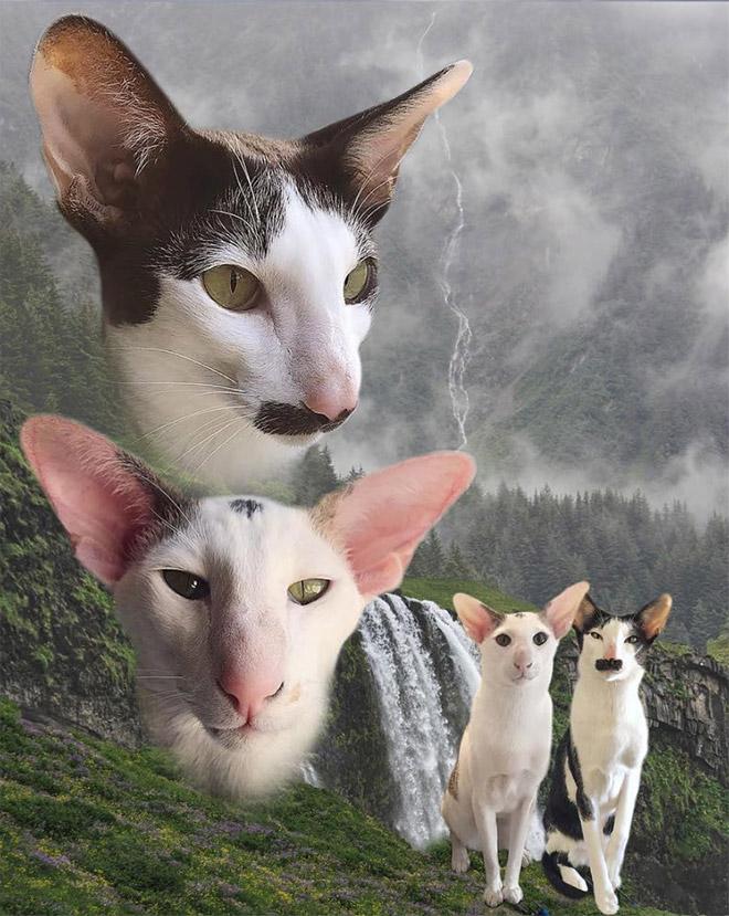 портрет смешных котов