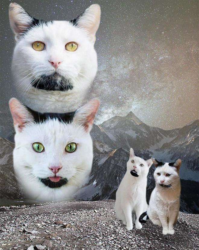 портрет котов
