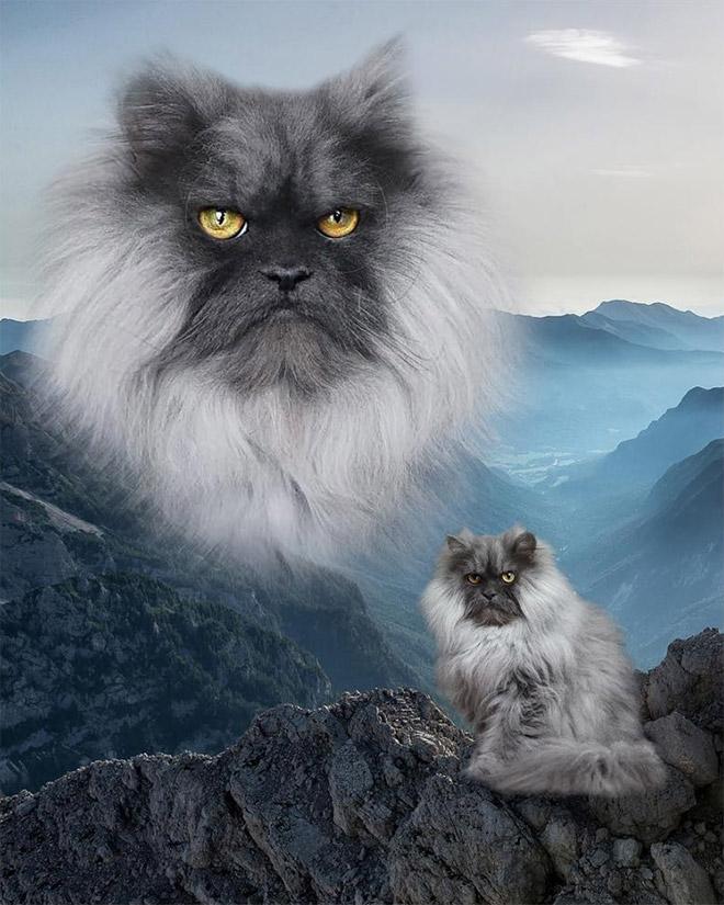 портрет сурового кота