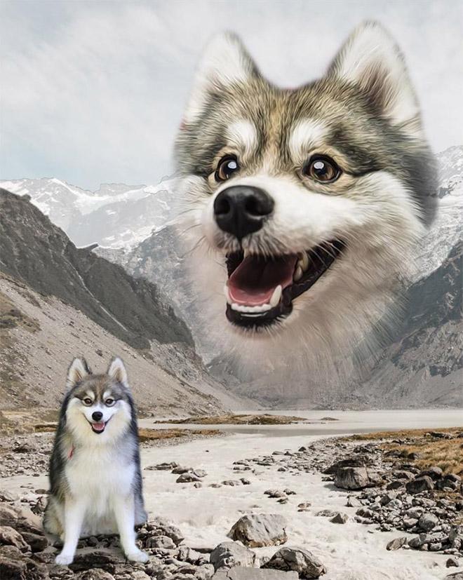 портрет щенка