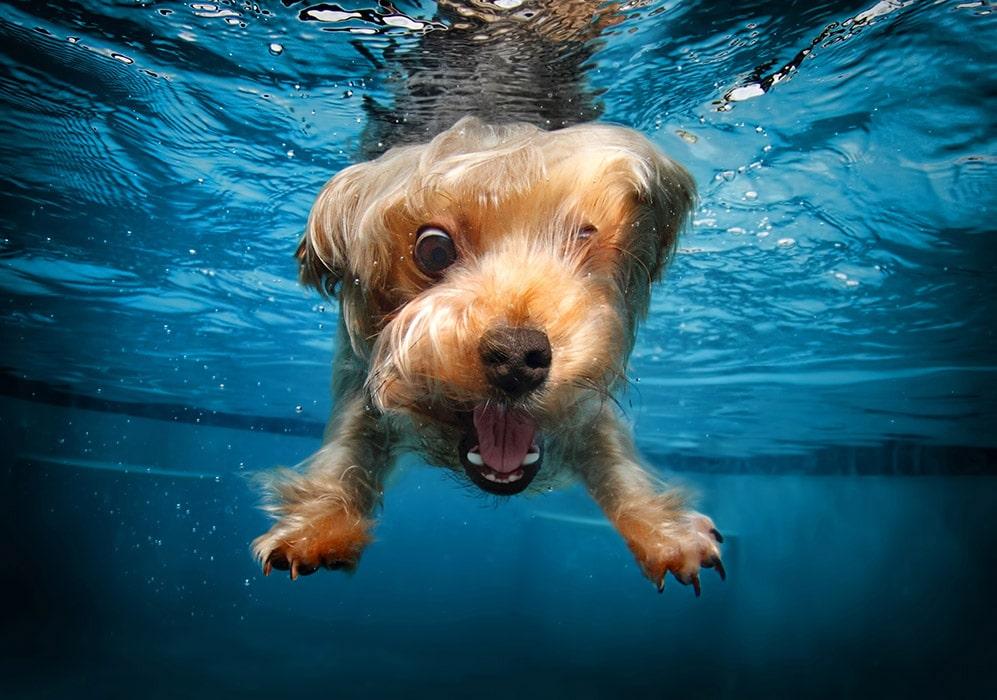 собака под водой рис 2