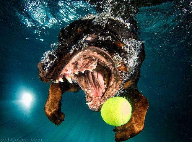 собака с мячом под водой