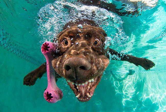 собака с игрушкой под водой