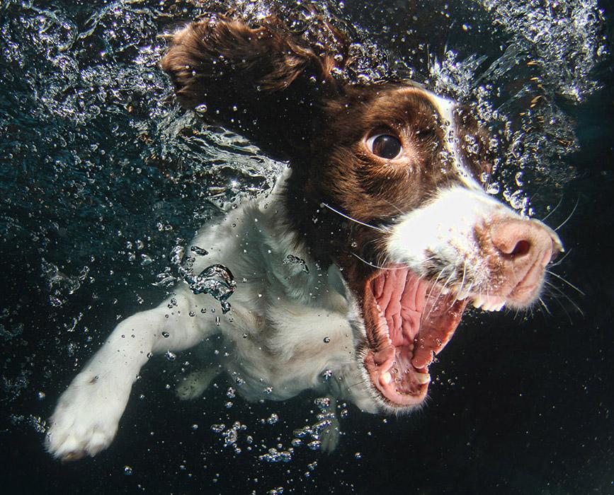 собака под водой рис 3