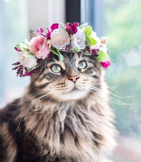 кошки, кошки фото, кошки красивые фото