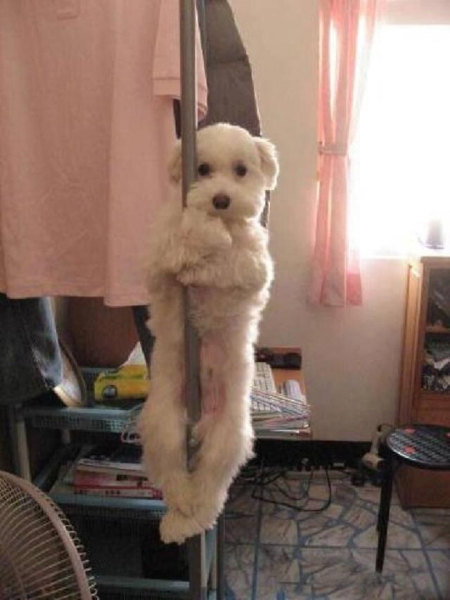 собака висит на шесте