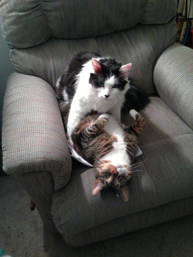коты в кресле