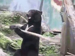 медведь с палкой