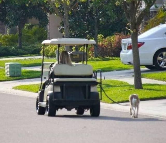 женщина на машине выгуливает собаку