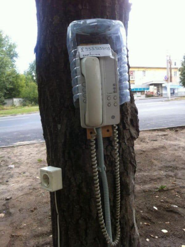 телефон на дереве