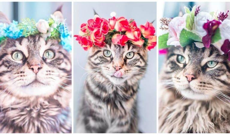 На стиле! 13 очаровательных портретов кошек-модниц