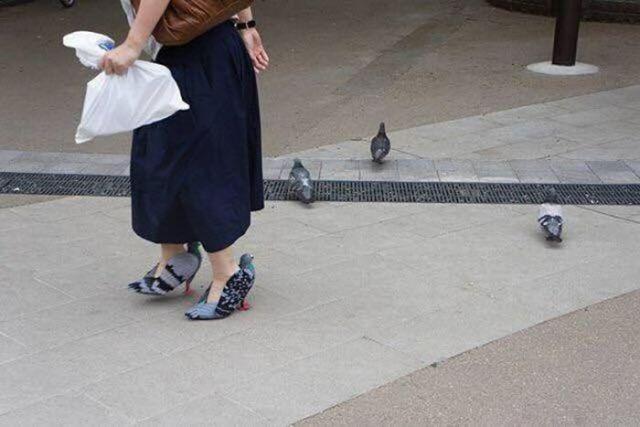 женские туфли в виде голубей