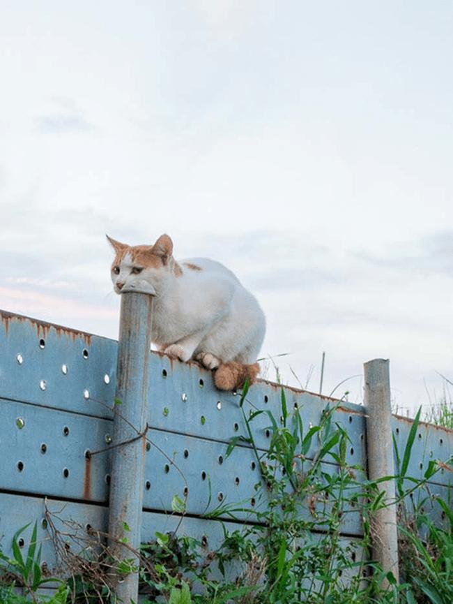 белый кот на заборе