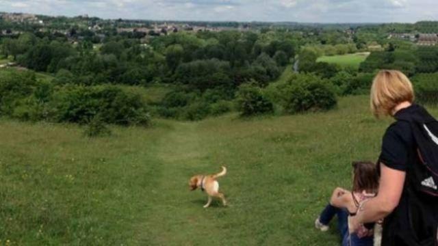 панорамное фото: короткая собака