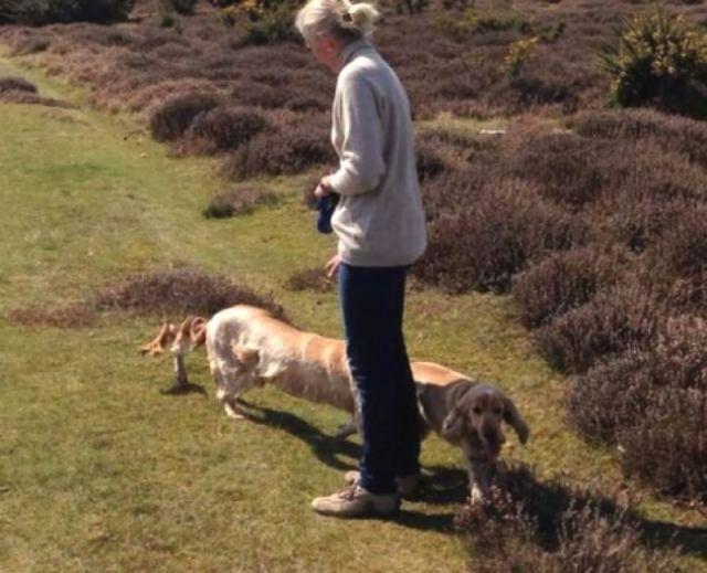 панорамное фото: женщина выгуливает собаку