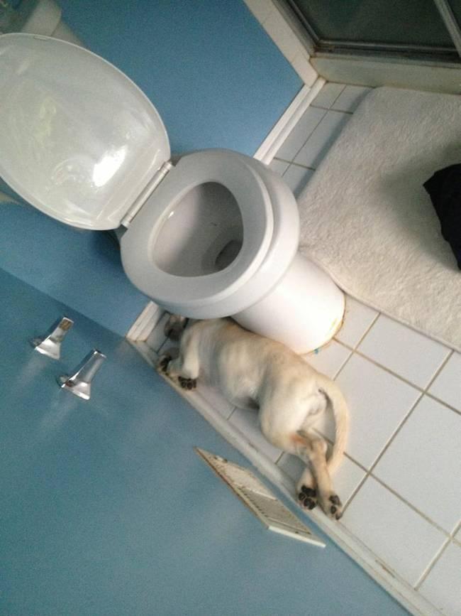 собака спит возле унитаза