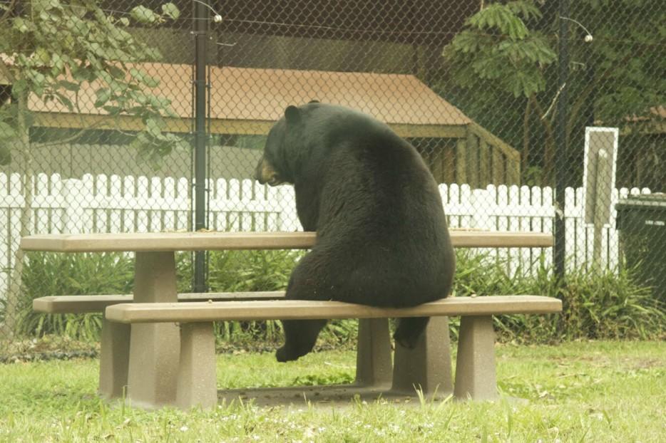 медведь сидит на скамье