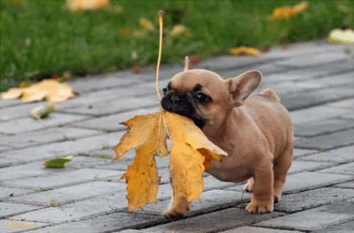 собака с листом в зубах