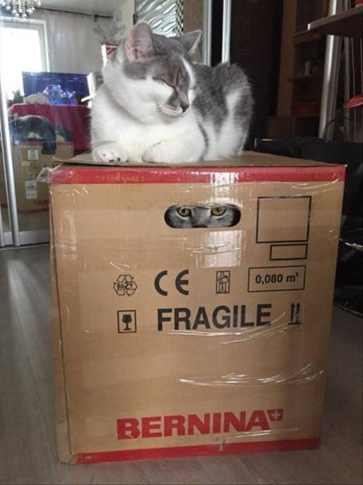 кот сидит на коробке с котом внутри
