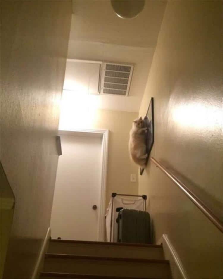 кот висит на картине