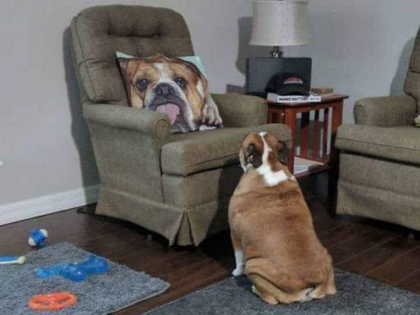 собака возле кресла
