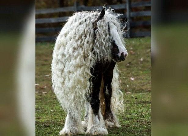 лошадь с длинной кучерявой гривой