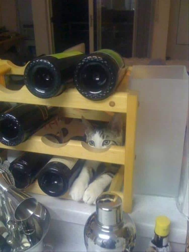 кот на полке с вином