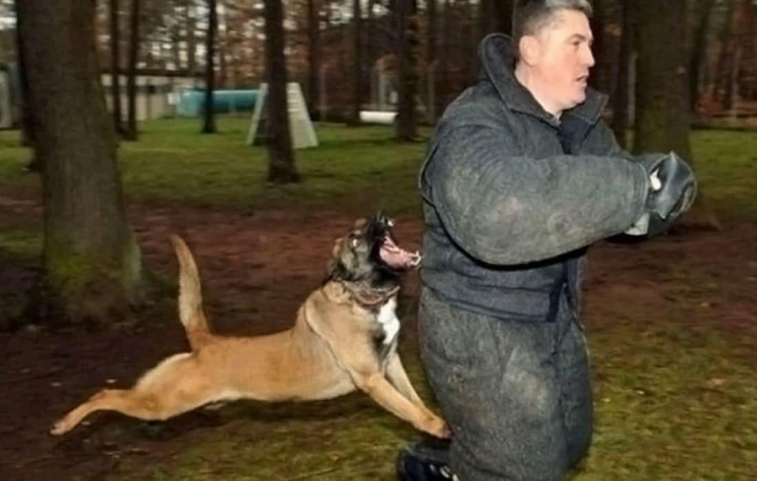 собака нападает на мужчину