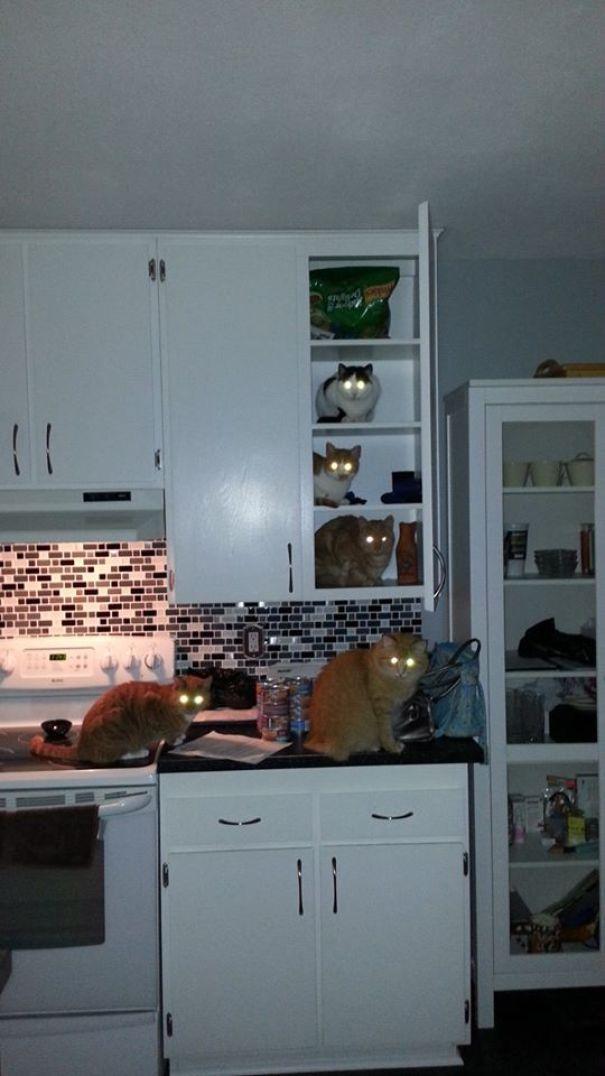 коты в кухне на столе