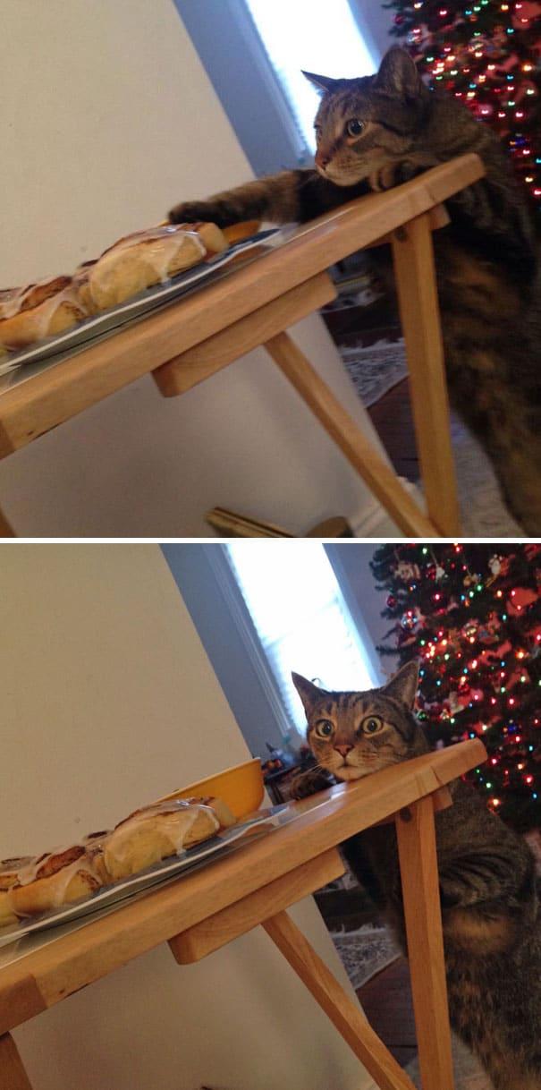 кот и пирожки