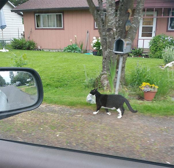 черный кот с газетой в зубах