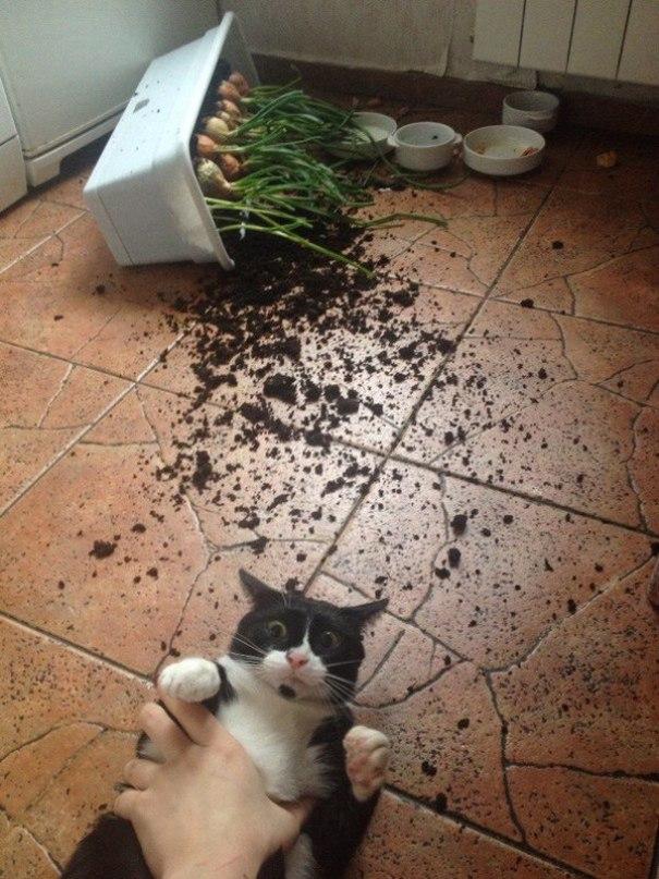 кот и перевернутый горшок с луком