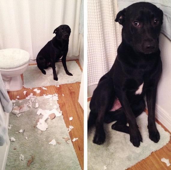 черная собака в туалете