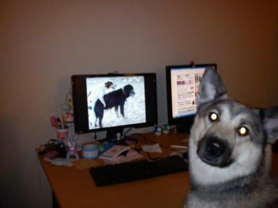 собака сидит перед компьютером