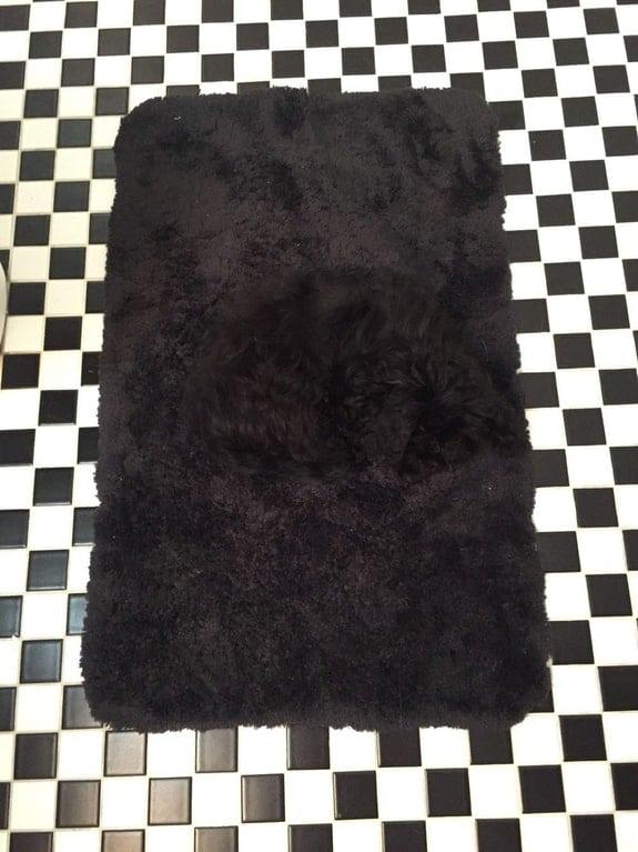 черная собака на черном ковре
