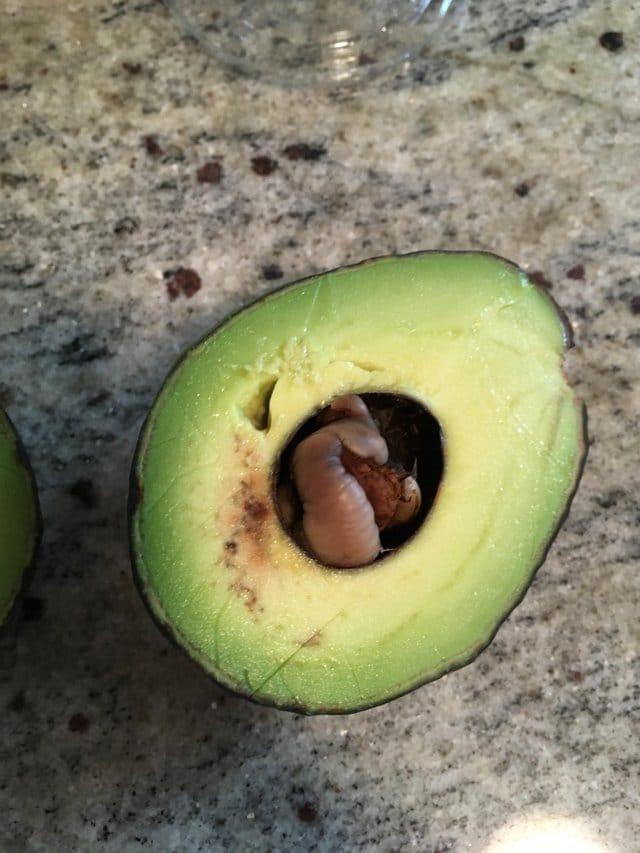 сгнивший авокадо