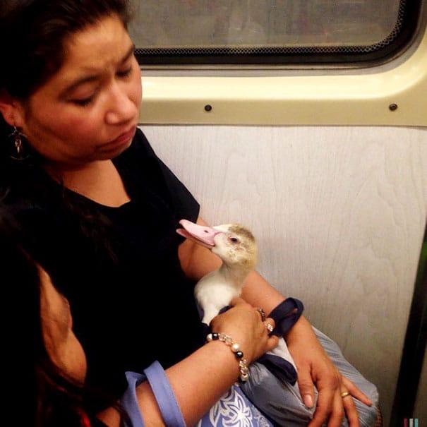 утка в метро