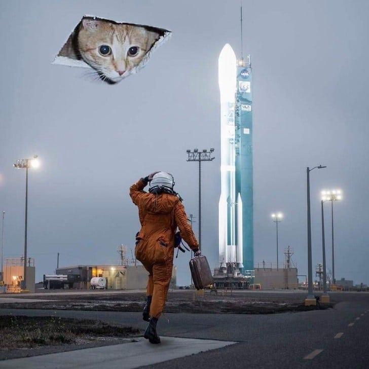 космонавт и кот
