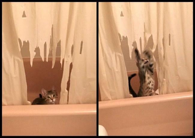 кот порвал занавеску в ванной