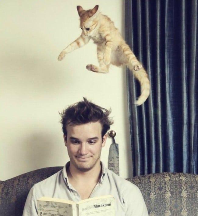 рыжий кот прыгает на парня