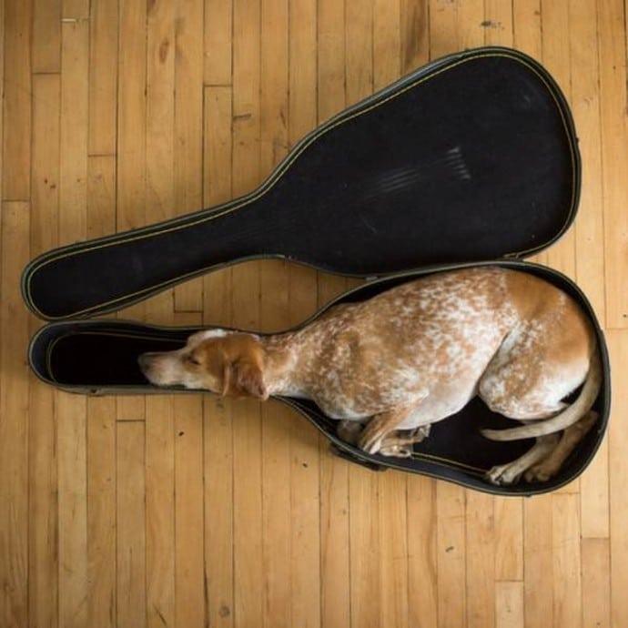 собака спит в чехле от гитары