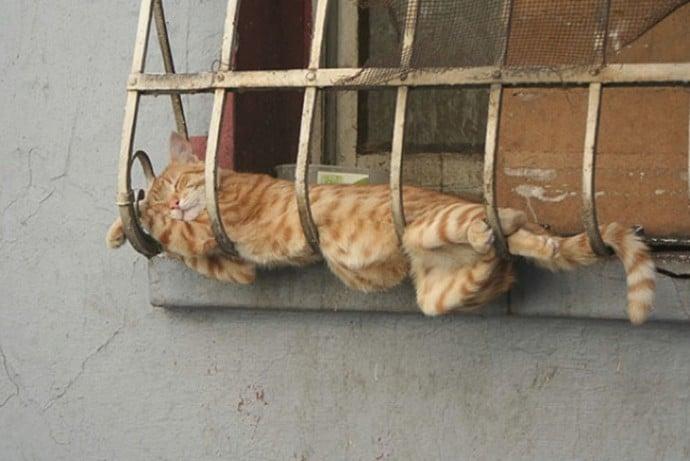 рыжий кот спит за окном