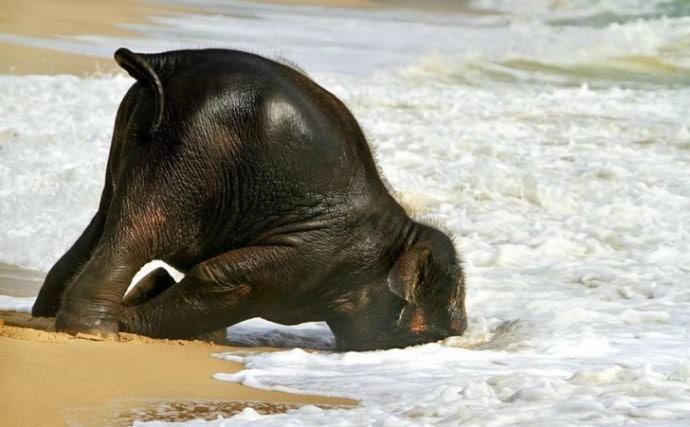 слон в воде
