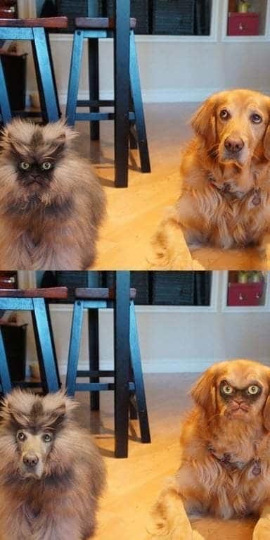полковник мяу и собака