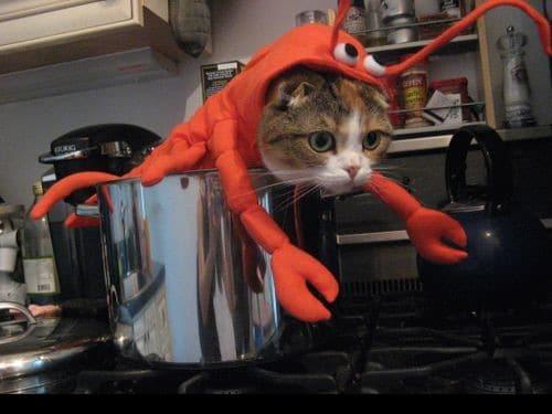 кот в костюме лобстера