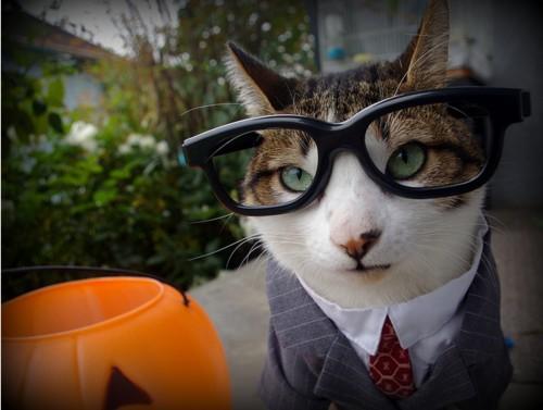 кот в очках и костюме