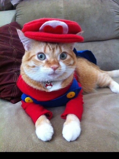 рыжий кот в костюме Марио