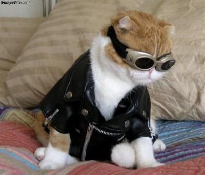 рыжий кот в косухе и очках