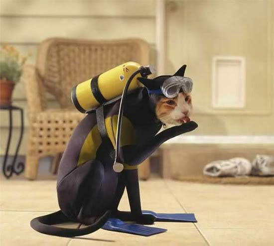 кот в костюме водолаза